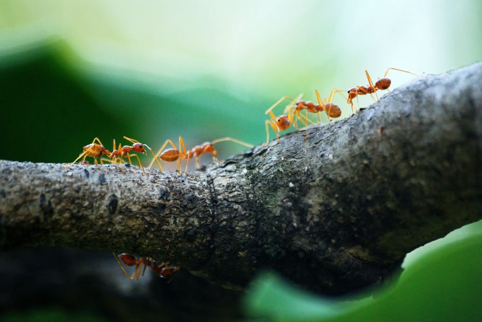 ¿Los humanos se auto-organizan como las hormigas?